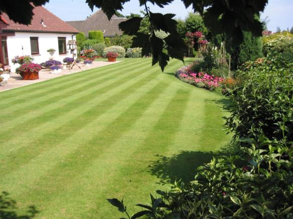 rear garden in the