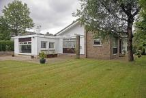 3 bedroom Detached Bungalow in Flamenco, Berryhill Road...