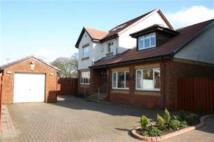 4 bed Detached property to rent in Kilsyth Gardens...