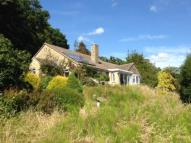 Bungalow for sale in Charmouth, Bridport...