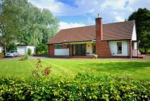 Detached Bungalow in Gilderdale...