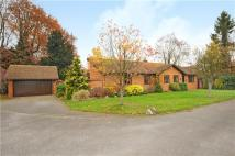 4 bed Bungalow for sale in The Conifers, Maidenhead...