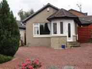 2 bed Detached Bungalow to rent in Buchan Drive, Dunblane