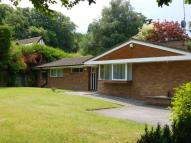 Bungalow to rent in Cannon Hill Road...