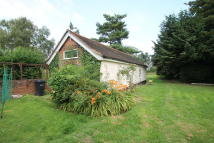 Detached Bungalow to rent in Newney Green, Chelmsford