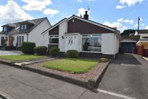 Detached Bungalow in Clydeview, Bothwell...