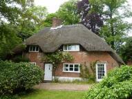 Cottage to rent in Shalden Lane, GU34