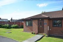 Semi-Detached Bungalow to rent in 1 The Conifers Hambleton...