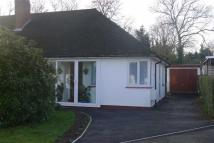 2 bed Semi-Detached Bungalow to rent in Chestnut Drive...