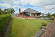Detached Bungalow for sale in Lon-y-plas, Northop Road...