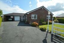 Detached Bungalow for sale in Llys Y Wern, Treuddyn