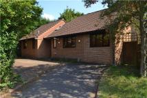 3 bed Detached Bungalow in Plumtree Close...