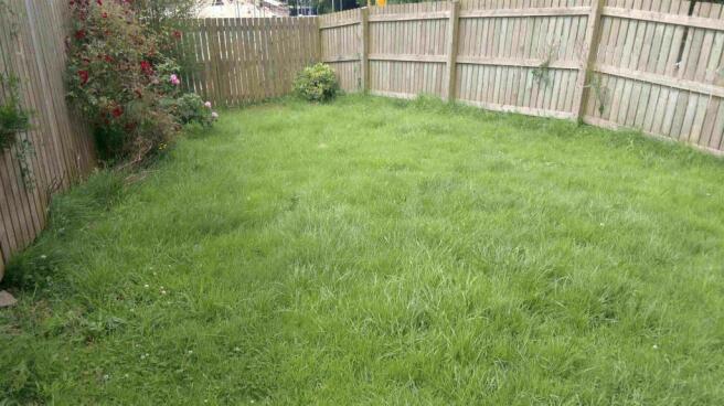 tinney rear garden.jpg
