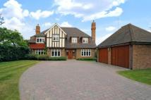 Detached property for sale in Chislehurst