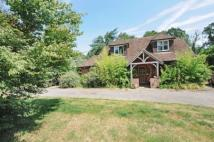 Bungalow for sale in Elstead, Godalming...