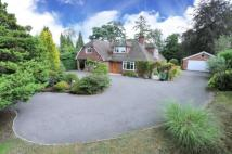 Bungalow for sale in Witley, Godalming, Surrey