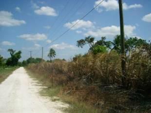 Road to development