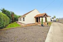 7 bedroom Detached Bungalow in Station Road, Manea...