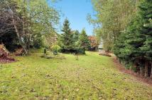 Land for sale in Black Brook, Sychdyn...