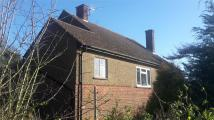 Bungalow to rent in Hockliffe...