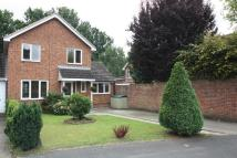 Bisley house to rent