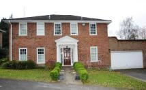 Detached house to rent in Horsell