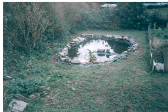 Pond in recent years