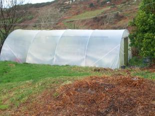Polytunnel in recent
