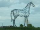 Saumur Horse