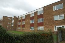 Selwyn Court Studio flat to rent