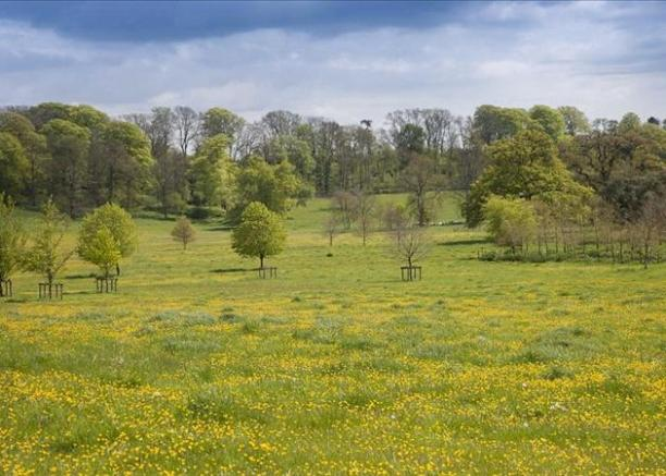Vibrant Parkland