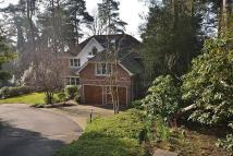 Detached property to rent in Springwood Place...