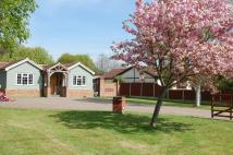 4 bed Detached Bungalow in Vera Road, Downham...