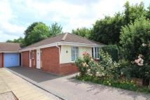 Detached Bungalow to rent in Redlake Drive, Taunton...
