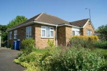 Detached Bungalow for sale in Landsdown Road, Sudbury