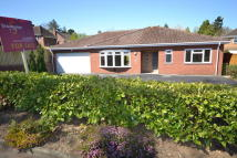 Detached Bungalow in Cringleford