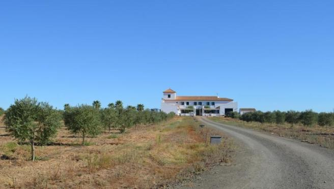 House and olives