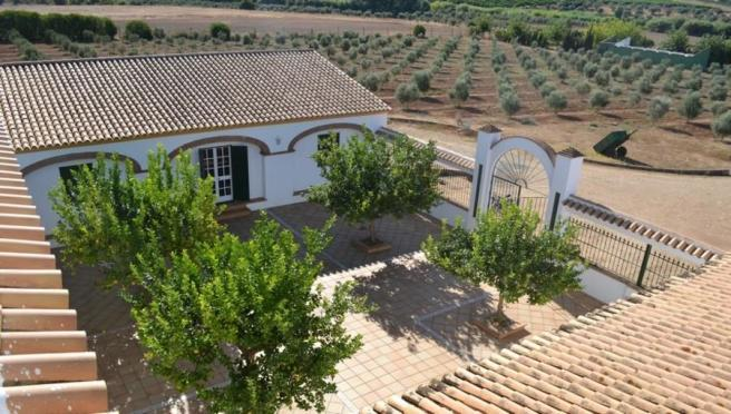 Patio + lemon trees