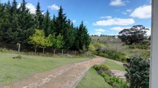 Fir plantation