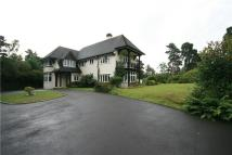 7 bed Detached house in Pine Coombe...