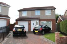 Detached property for sale in Hargill Drive, Rickleton...