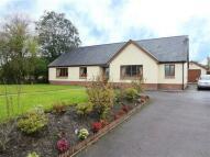 Detached Bungalow for sale in Patience, Dyffryn Road...