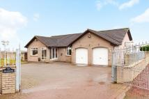 Bungalow for sale in Brownlee Road, Law...