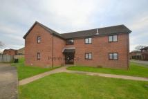 Studio flat to rent in Lime Tree Avenue...