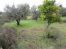 Fundão Farm Land for sale