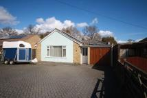 Detached Bungalow for sale in Owls Road, Verwood