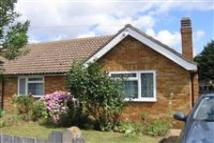 Bungalow to rent in Great Baddow