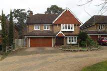 Leatherhead house to rent