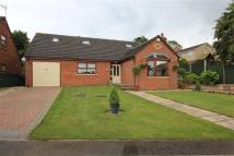 Detached Bungalow in 11, Polyfields Lane...