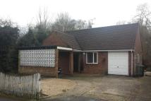 Bungalow to rent in Liphook Road, Lindford...
